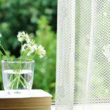 窓際の植物